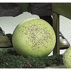 Large Cream Speckled Egg