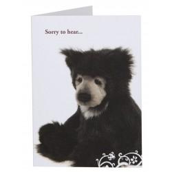 Gift Card Slothy