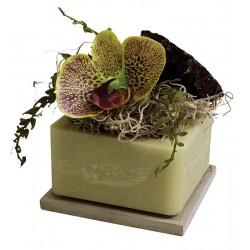 Lotus Blossom & Orchid GEO