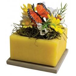 "Monarch Migration 6"" Square Fragranced GEO"